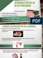 Aparato-reproductor-de-la-hembra-en-porcinos.pptx