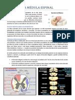 Haces de La Médula Espinal