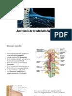 5- Medula espinal.pdf