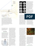 The Neurobiology of We - Patty de Llosa