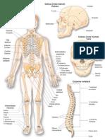 Sistema Oseo Atlas