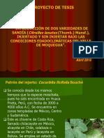 TRABAJO DE INVESTIGACIÓN SANDÍA.ppt