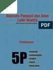 Anatomy Jalan Lahir
