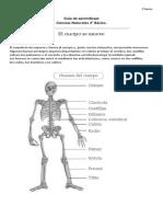 Guia, Esqueleto y Musculos