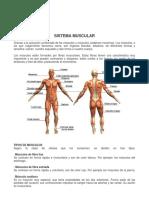 Ciencias Naturales Los Musculos