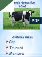 Vaca Cunoasterea Mediului (1)