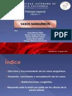 Patología Especial - Vasos Sanguíneos