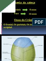 Anatomia Da Cabeça e Coluna Vertebral