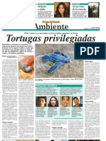 C1-Tortugas