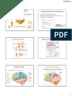 97313754-4deg-Control-Nervioso-Del-Movimiento-y-Contraccion-Muscular-40.pdf