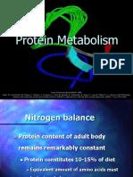 Protein Metabolisme