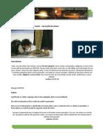 06 - FESTAS DO SENHOR – EXPIAÇÃO – SALVAÇÃO DE ISRAEL.pdf