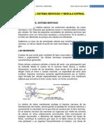 Clase 2 Biologia x Neuro