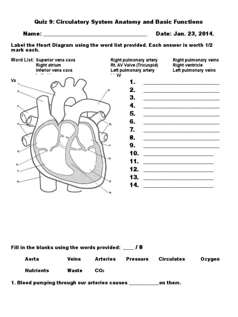 Heart Diagram Fill In The Blank Human Body Anatomy