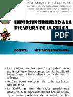 Hipersensibilidad a La Picadura de La Pulga