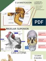 Anatomia Exposicion