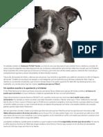 Nombres Para Perros Pitbull - Expertoanimal.com