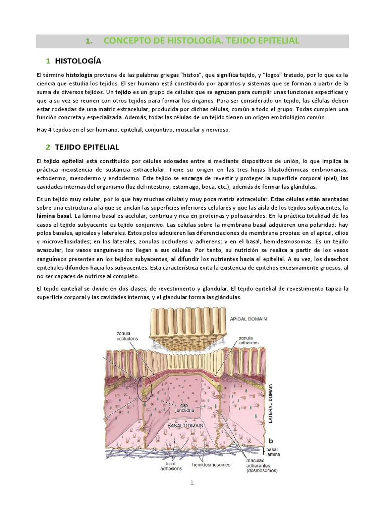 Apuntes Histología COMPLETO.pdf