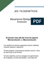 33_5A_-_Patrones_Filogeneticos_2015
