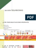 Sistema Tegumentario Fascias y Sistema Esquelético
