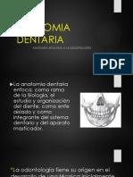 Anatomia Aplicada a La Odontologia
