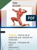 Sistema Muscular Grado 8 Mañana