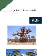 Árbol Baobab o Árbol Botella