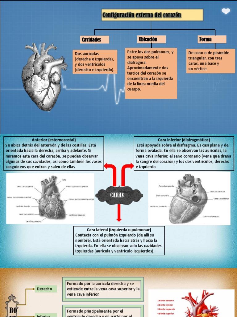 Anatomia.....