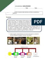 guiadeaprendizajecadenaalimentaria-121212173300-phpapp01