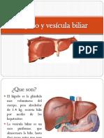 Hígado y Vtre