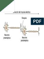 sinapsis a3