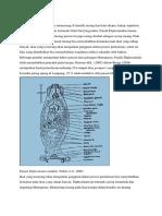 Diplectanum Sp