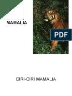 11-mammalia.pdf