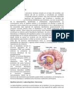 Trabajo Escrito Glandulas Endocrinas (1)