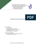 Embriologia Mulatura Del Tronco