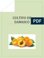 El Cultivo de Damasco