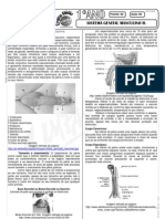 Biologia - Pré-Vestibular Impacto - Sistema Reprodutor - Masculino
