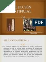 Selección Artificial