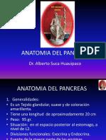 12 Anatomia Del Pancreas