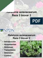 Ralstonia solanacearum raza3 bioaver2.pdf