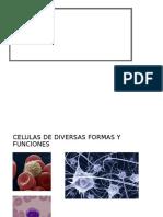 Histogenesis Del Embrion