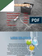 PPT Pleno E6 (Polidaktili) - Gamaliel