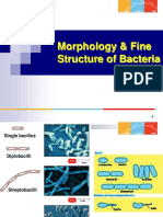 Lecture 7-10 (the Morphology Fine Structure of Bacteria)