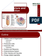 04 Lecture Animation Cell Ppt