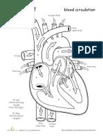 anatomy-heart-2.pdf