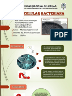 Exposicion - Pared Bacteriana