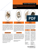 HOJA_08_Coleccion_basica_de_r...pdf