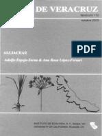 Flora de Veracruz Alliaceae