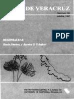 Flora de Veracruz Begoniaceae