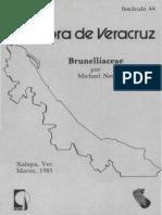 Flora de Veracruz Brunelliaceae